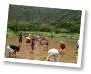 Waipo Valley Service Project
